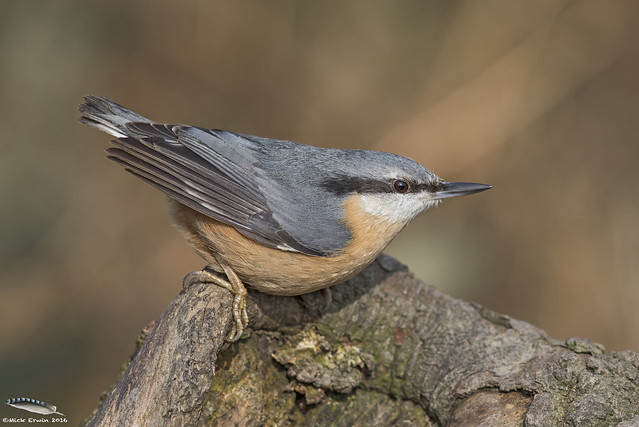 Nuthatch ready to launch!