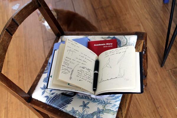 Sketchbooks and ginger cat - Misericordia