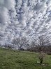 Clouds over Apple Trees