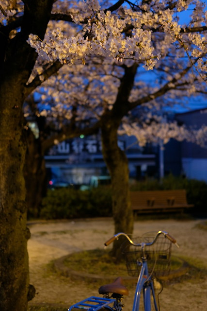 Sakura bicycle
