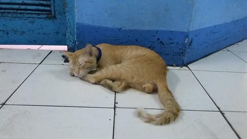 ER Cat
