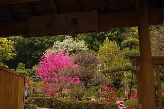 2016/04/10_町田ぼたん園-14