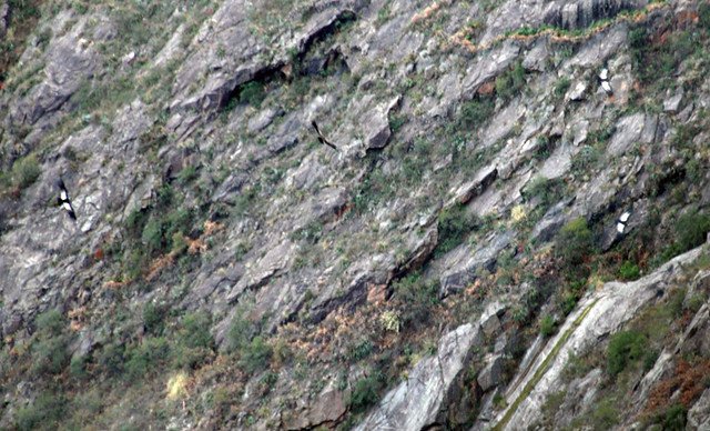 The cliffs of the Quebrada del Condorito (Canyon of Condors), where Argentinean condors have a 'flight school'.
