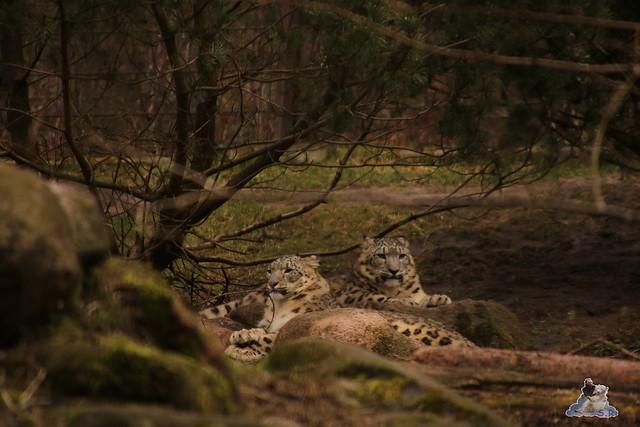 Wildpark Lüneburger Heide 31.03.2016  0093