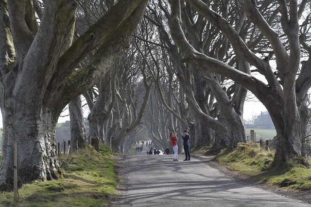 The Dark Hedges (Camino Real)
