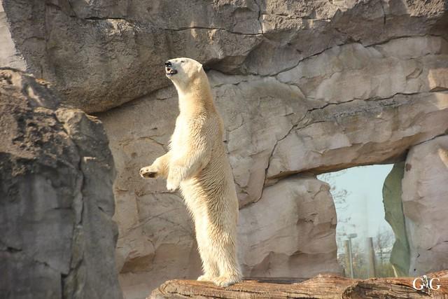 Zoo Bremerhaven 10.04.16 2.Teil38