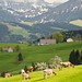 switzerland mountains and cows by WildernessShots.com
