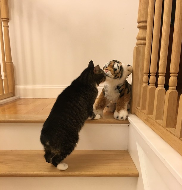 Murderface inspects the tiger