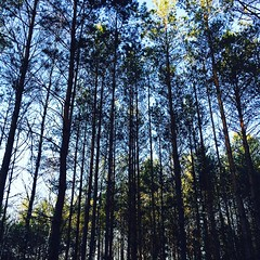 Forests in northern Poland are one of my favourite places to be. Utterly spellbinding :heart:️