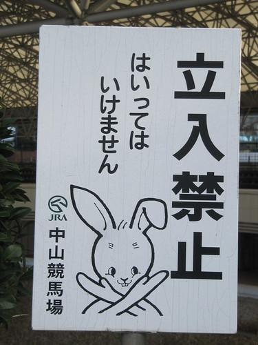 中山競馬場のウサギ