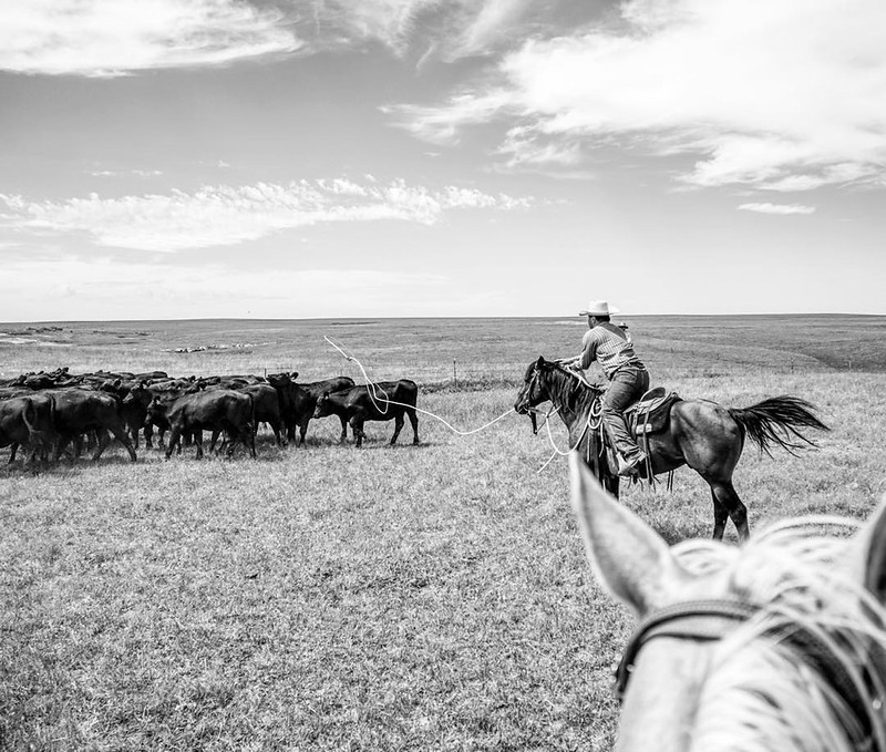 Throwback to a much warmer day than today... It's currently -9 degrees F, and it feels like the furnace can't even keep up. I took this photo in July of last year from the back of my yellow horse, Avie. And of course my other half is roping on #chachithew