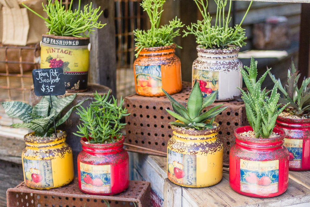 the grounds of alexandria buy succulents