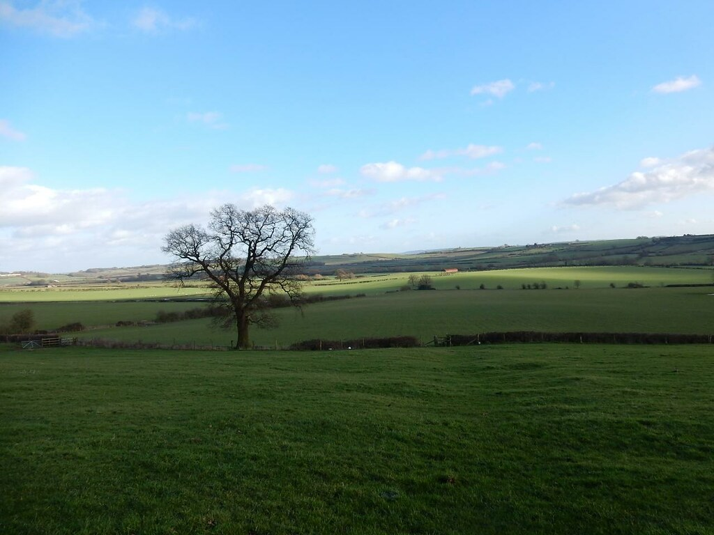 Tree and view Haddenham Circular (short)