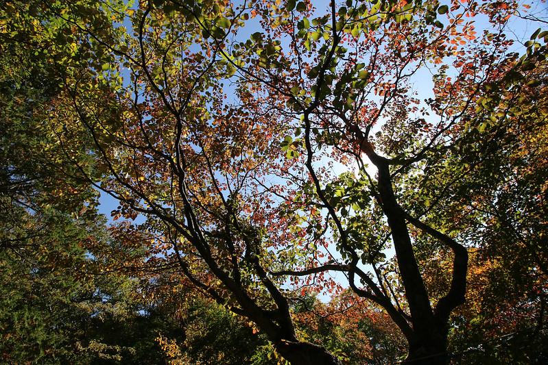 2014-10-12_00068_男体山.jpg