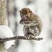 Frozen on a branch by ラルフ - Ralf RKLFoto
