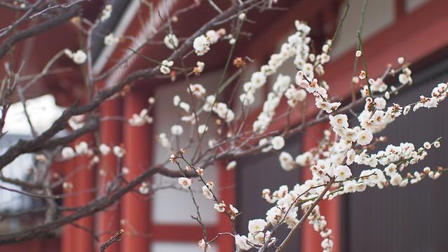★2016年3月5日浅草-13