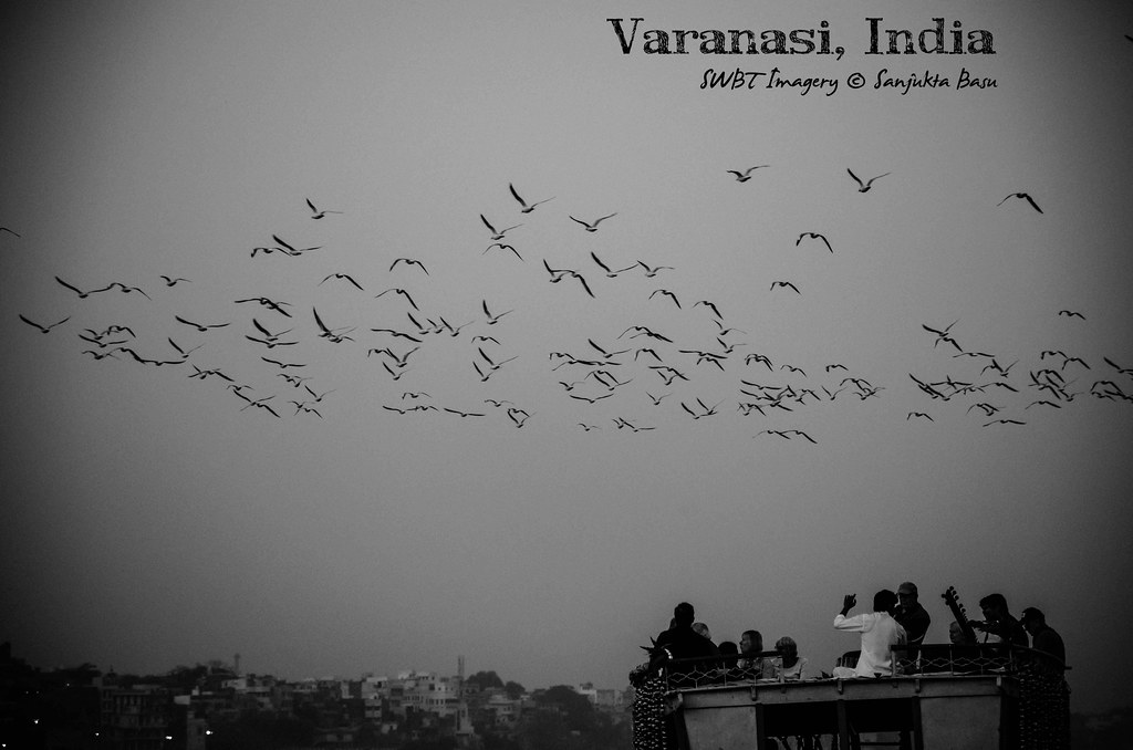 Varanasi Ganges Flock of Birds Poster