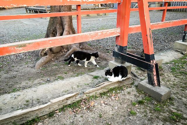 Today's Cat@2016-03-25