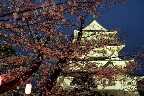 Chiba Castle with cherry blossoms 06
