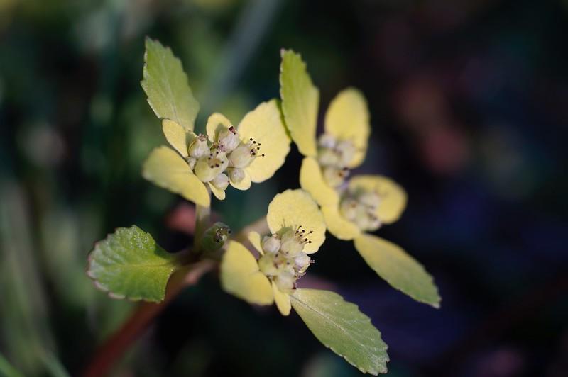 Wild flowers of spring