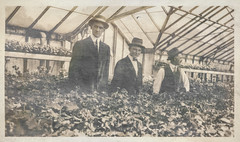 Group of men in a greenhouse 2