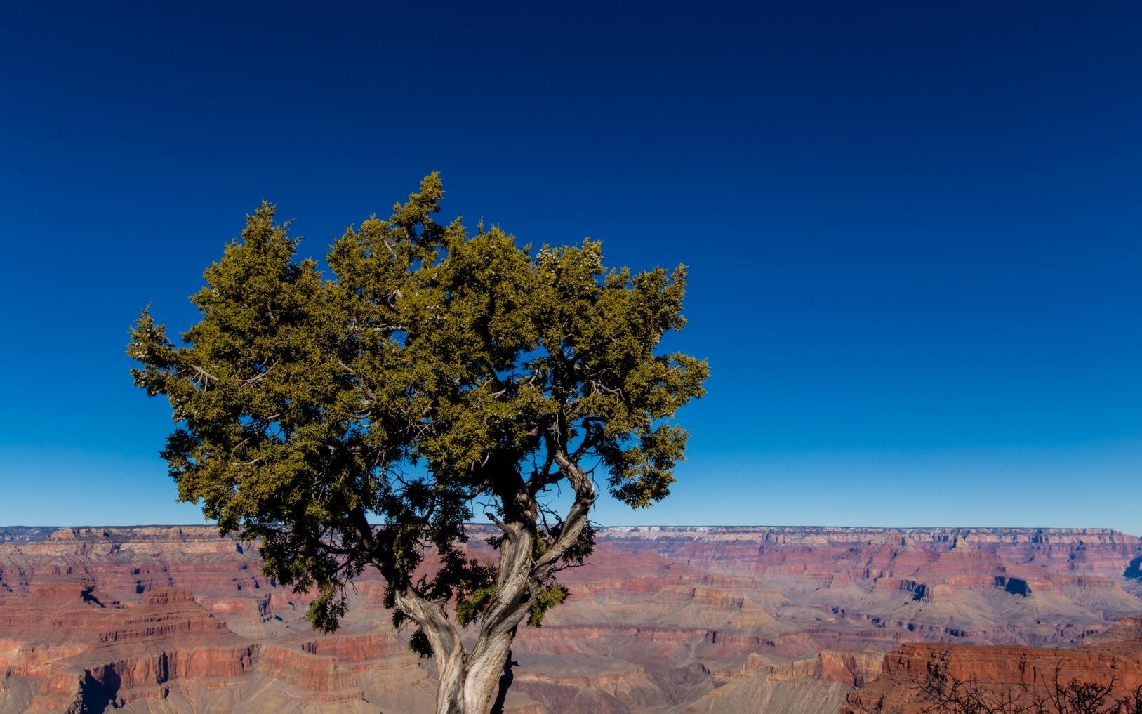 Grand Canyon 2016-1061