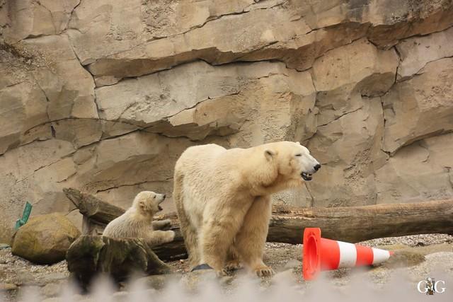 Zoo Bremerhaven 09.04.16 1.Teil107