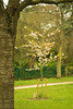 20160424-03_Memorial Flowering Cherry Tree_Top Green Coventry