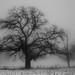 there_I_stood #fog #weather #oak by NetAgra
