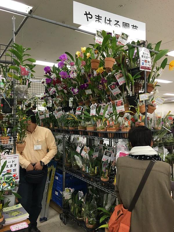 2016/01/07 サンシャインらん展 やまはる園芸