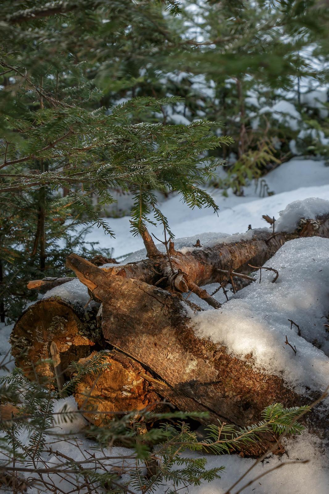 sunlit logs