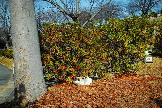 Today's Cat@2016-01-16