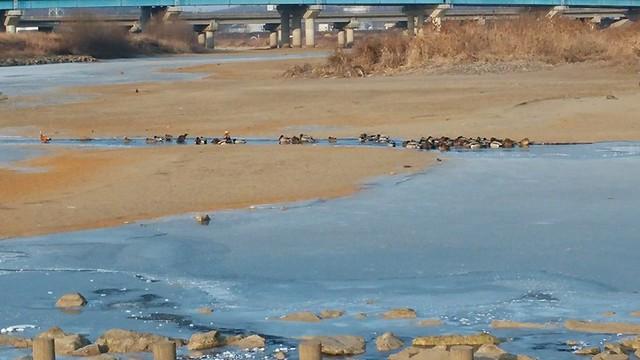 공릉천 관찰일기 | 얼음나라