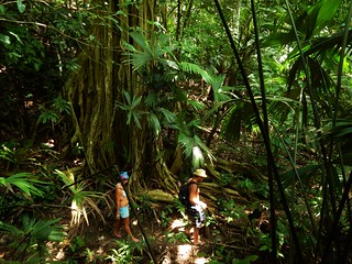 Across the Darien jungle