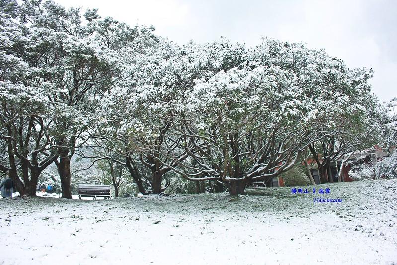 2016-台北陽明山-瑞雪-難得一見的雪白山景-17度C隨拍 (75)