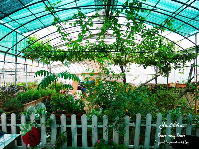 台北內湖一日遊採草莓下午茶草莓園 (11)