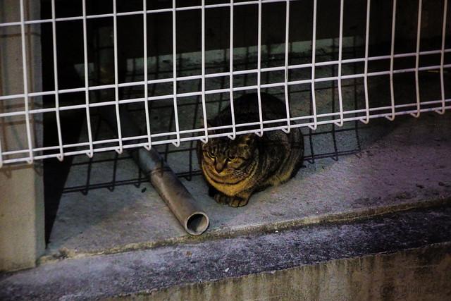 Today's Cat@2016-02-17