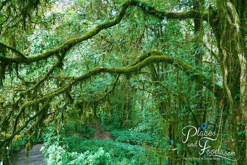 doi inthanon ang ka nature trail moss branches