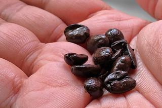 Everyday Coffee in the City - Peet's Coffee Arabian Mocha Java Whole Beans