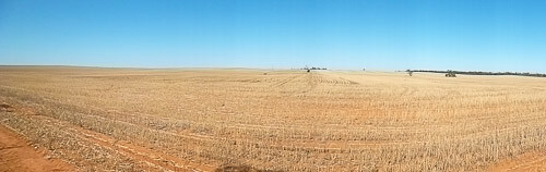 Wheat stubble on the Mallee