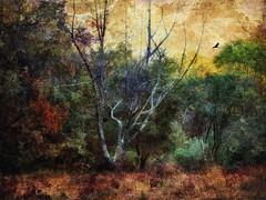 Moody Autumn Redux