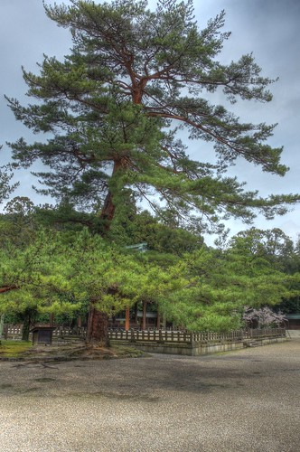 Kashihara Jingu Shrine area on APR 04, 2016 (5)