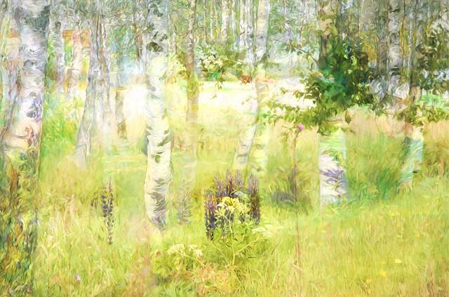 Birches in springtime SS