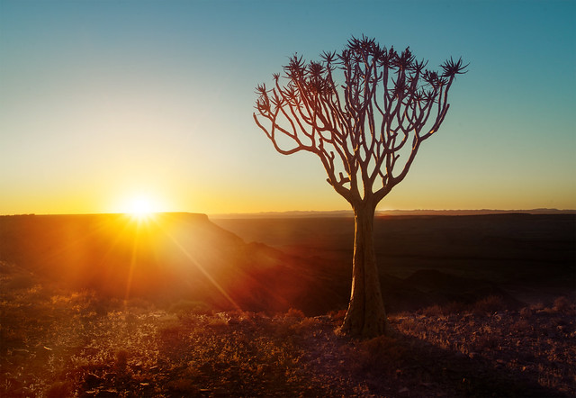 Trees In Namibia