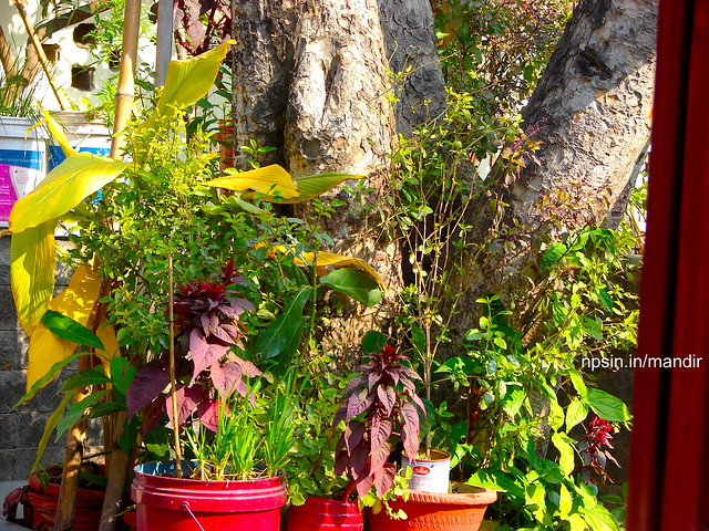 Peepal Tree with Other Plants