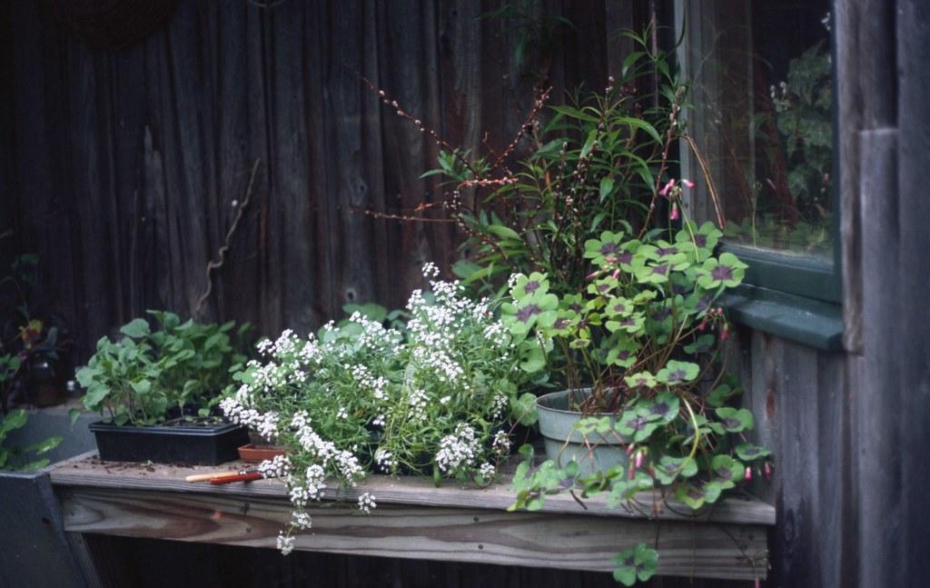 never enough plants