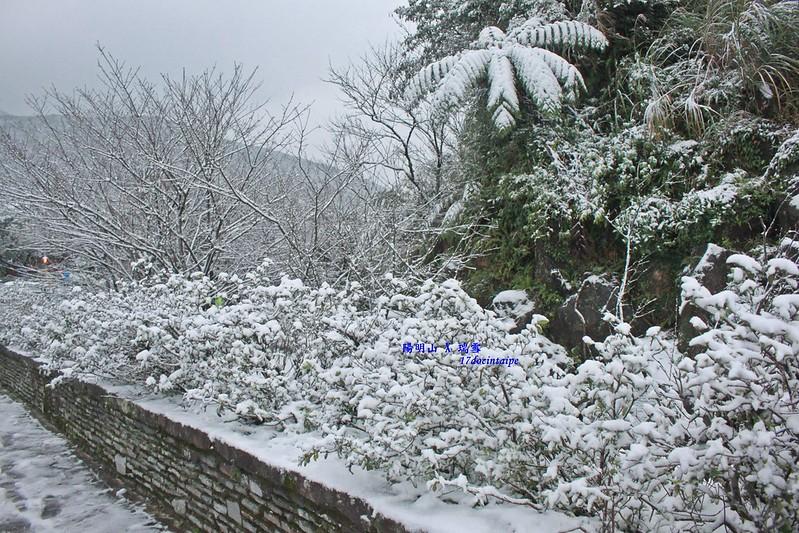 2016-台北陽明山-瑞雪-難得一見的雪白山景-17度C隨拍 (40)