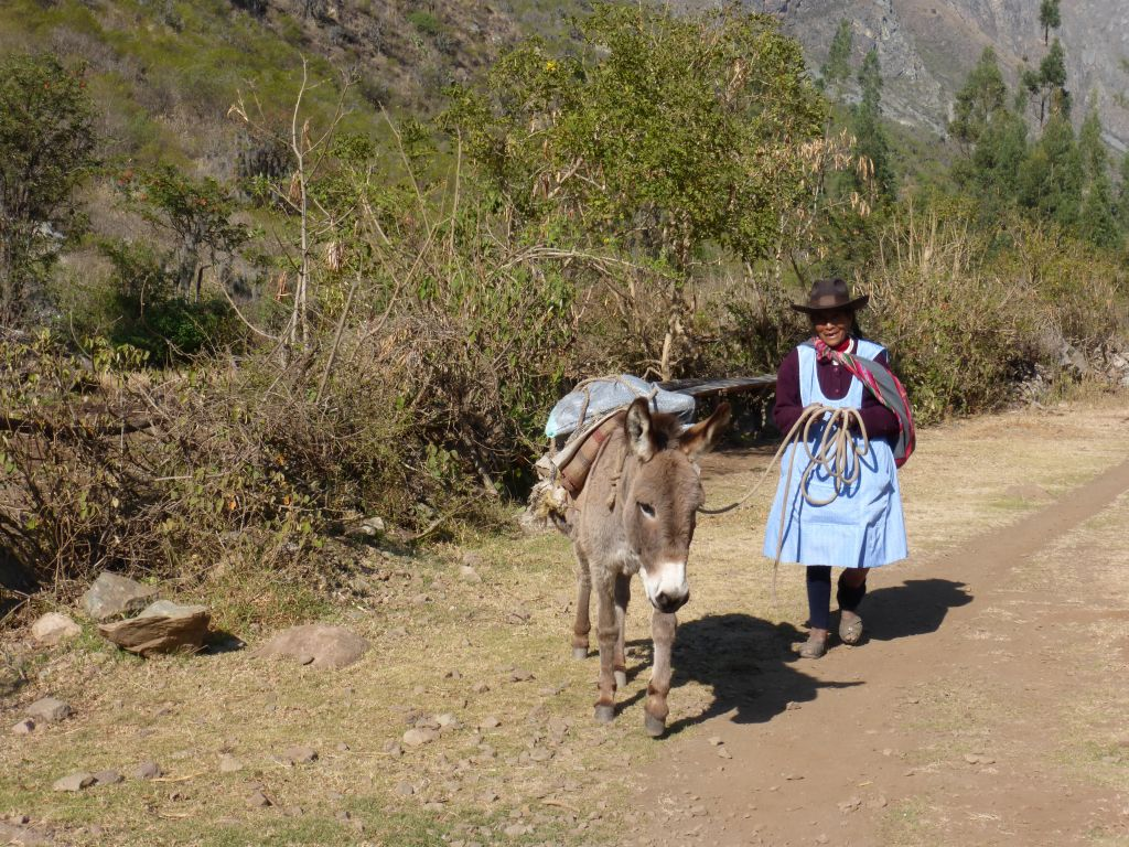 Donkey on the way to Machu Picchu