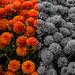 Orange Flowers 4