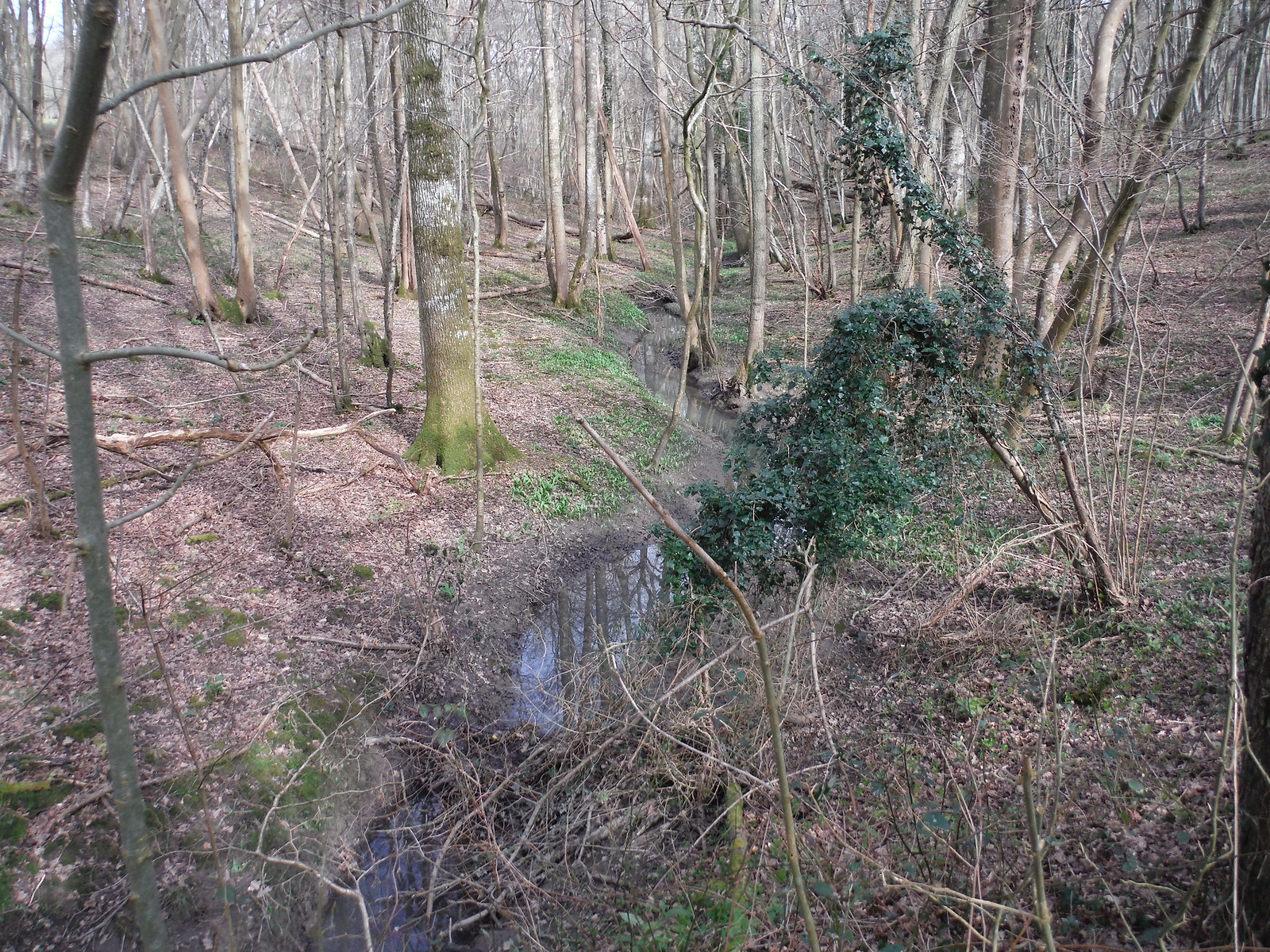 Stream in wood on grounds of East Sussex National Golf Course SWC Walk 262 Uckfield to Buxted